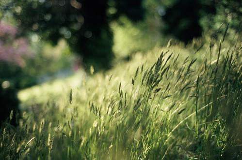 film grass 35mm nikon fuji cemetary f100 400 hollywood johnnyutterback shutterback archivesmay2009