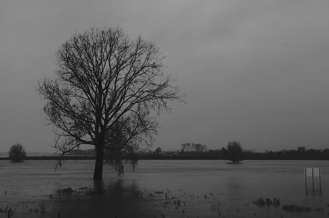 Lith Bakenboom bij Hoog Water Beacontree at high waterlevel