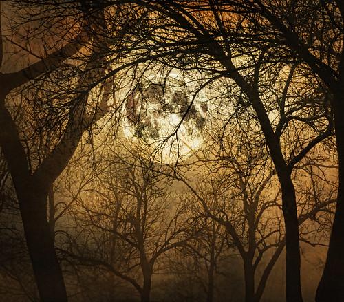 trees winter moon texture forest photoshop canon glow moonrise canopy tone forestcanopy texturedlayers topazadjust canoneosdigitalxsi saariysqualitypictures magicunicornverybest selectbestexcellence magicunicornmasterpiece sbfmasterpiece jackaloha2 moonrisefromforestfloor