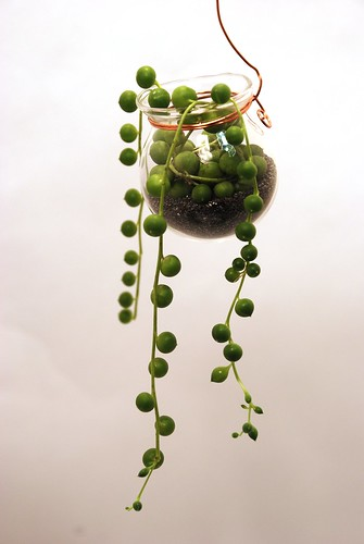 hanging pot with string of pearls