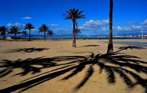travel winter shadow sea sky cloud colour reflection tree silhouette sunrise landscape bay spring spain nikon traveling dslr mallorca palma majorca balearicisland platjadepalma mediterraneanlandscape badiadepalma nikon1855mmf3556gafsdxvr d3100 nikond3100