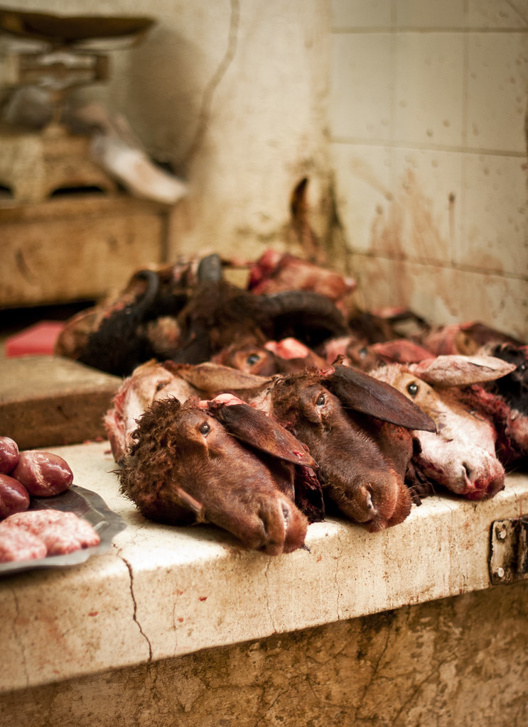 Sheep head at the meat market in the Fez Medina, Morocco | Flickr