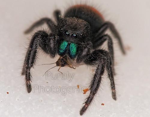 Spider-lunch   by sgbofav