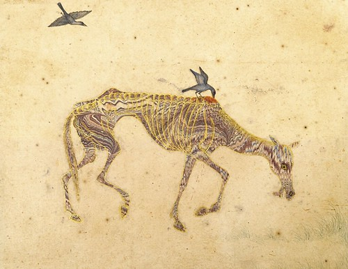 An emanciated horse harrased by birds (marbled paper drawing) - Deccan, India, mid 17th century | by Cea.