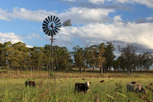 windmill cattle australia southerncross farmland queensland 24105mm apicaday goomburra canon5dmk2 3652011