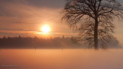 winter sunset sky sun snow tree canon landscape belgium dusk snowy belgië filter dew lonely bruno flanders flandersfields cokin vlaanderen 450d 121s misseeuw brunomisseeuw