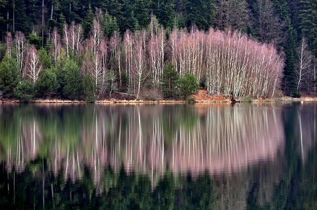 lac de Pierre Percée... reflets