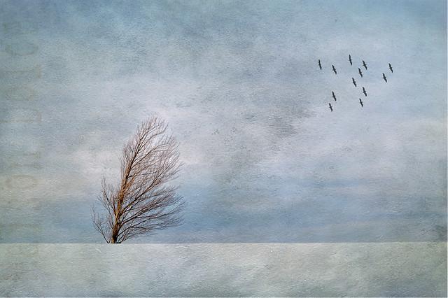 Un arbre sous le vent