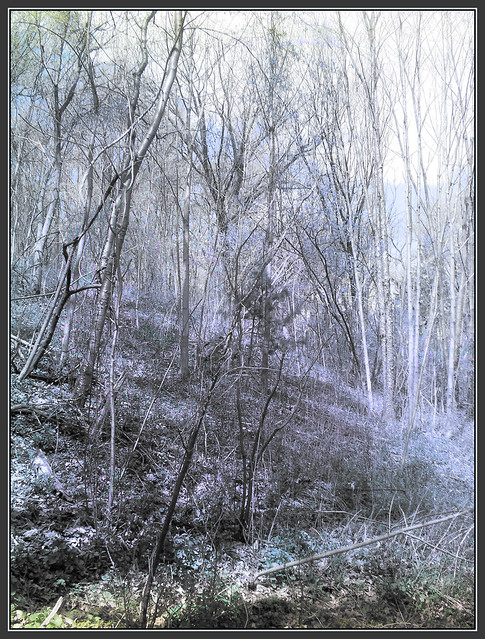 March Forest