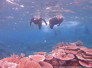 Snorkling in the Great Barrier Reef (Australia 2011)
