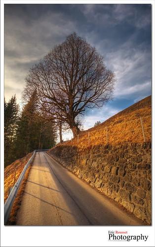 voyage travel winter sunset alps tree alpes landscape photography switzerland europe suisse hiver wideangle paysage canonef1740mmf4lusm hdr highdynamicrange gstaad 2011 photomatix adobephotoshopcs3 canoneos5dmarkii ericrousset bwslimksmmrccircularpolarizerfilter