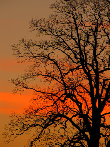 sunset tree silhouette northcarolina blueridgeparkway westernnorthcarolina southernappalachians ccbyncsa moseshconememorialpark canonpowershotsx10is