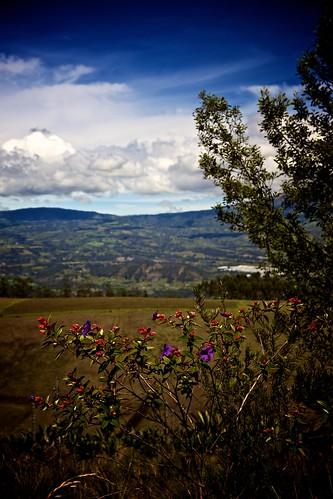 landscape parquecondor