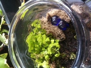 Terrariums are miniature landscaped ecosystems made from hardy plants  and moss. We took the process one step further, creating small  sculptures from wire, clay or found objects to add to our terrariums.  Participants brought their own seashells, rocks, nests and other tiny treasures...  Including a hand made octopus!  Thanks to Ellen Mann for contributing her Mannipulations Photography!