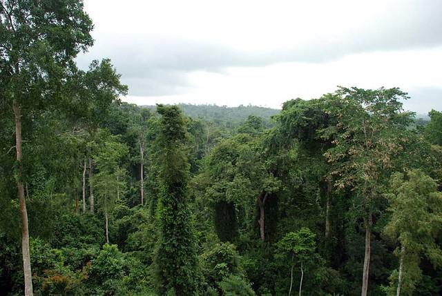 Kakum Old Growth Rainforest