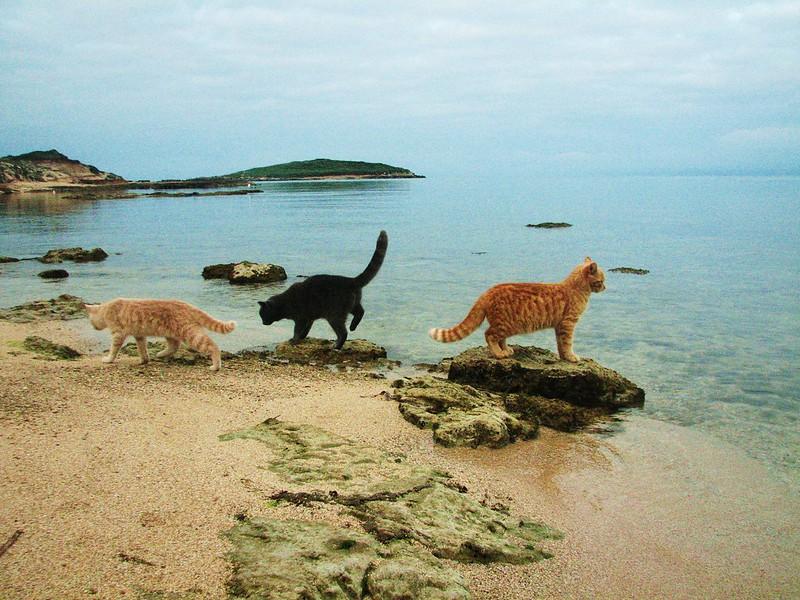 Su Pallosu, la spiaggia dei gatti.  © 2011 (Tutti i diritti riservati)