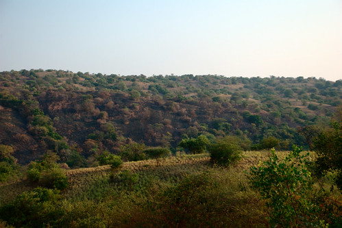 africa pflanze himmel afrika savannah uganda grün 32 baum escarpment kabwoya