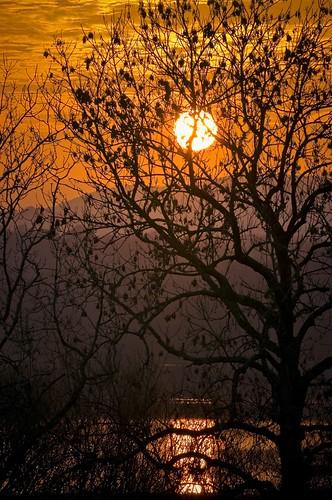 new trees sun scotland ken loch galloway parton