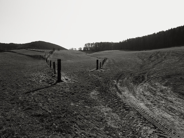 Wald 014/2011/03/08