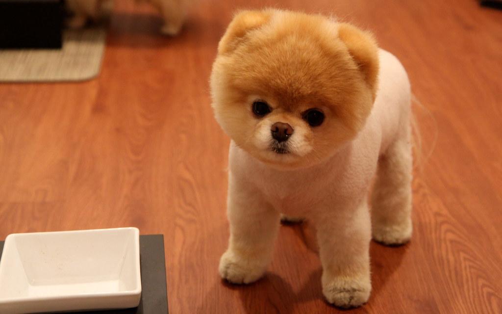 Cutest Small Dog Breeds Via Pets Gallery Blog Ift Tt 1t1qq Flickr