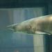 2011 - Baltimore Aquarium