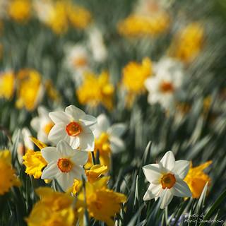 ...un po di primavera.