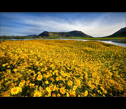 california flowers sky yellow landscape spring wildflowers lakeview morenovalley sanjacintowildlifearea