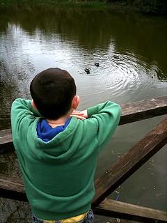 Watching the ducks | by akrabat