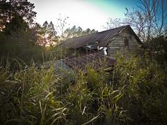 Garage & Bamboo