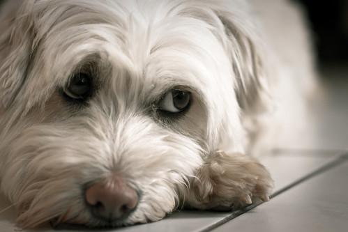 A dog's life | by Herr Olsen