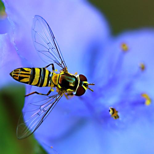 hornet | by beckymaldonado