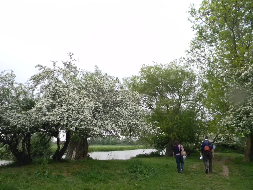 Flowering hawthorn Huntingdon Circular