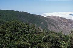 Mountain vegetation, Volcan Poas, San Jose, CR, 2001_02_27 001.jpg