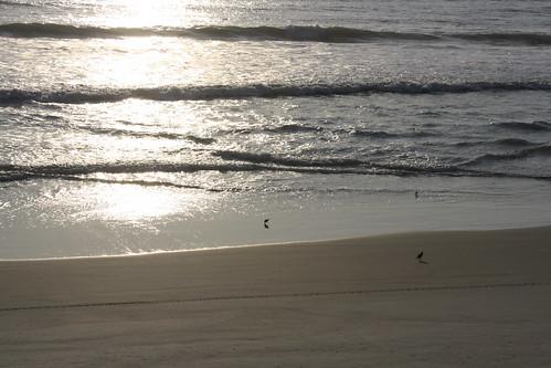 park beach state florida may rogers gamble flagler 2011