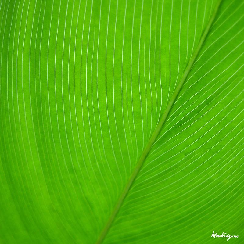 Green Leaf - Feuille verte