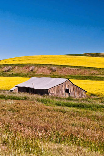 summer washington farmland fields wa canola