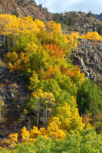 Lovely Fall colors near North Lake, outside of Bishop, CA
