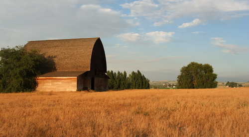 grass farm easternwashington yakimavalley goldgolden sunnysidebarn