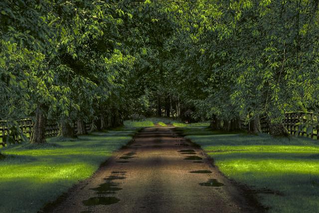The tree lined drive into Cawdor Castle, Nairn, Invernesshire, Scotland
