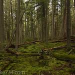 Rainforest-ish