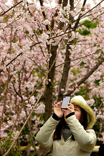 Cherry Blossoms: take the photo | by Kamal Zharif