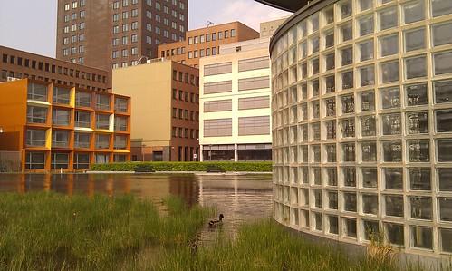 Eend en architectuur bij HHS