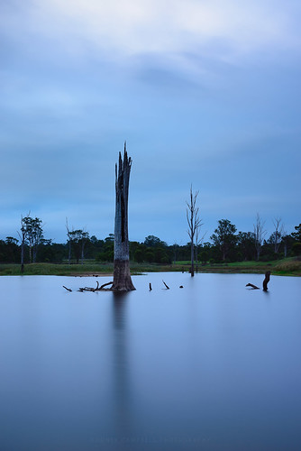 longexposure sunset sky plant tree water australia newsouthwales cpl cecilhills gnd06 bigstopper