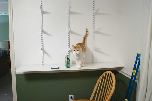 Tenzing is always helpful. He seems to really like these shelves.