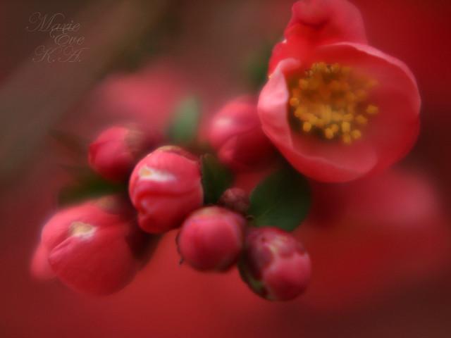 Joy of rouge..
