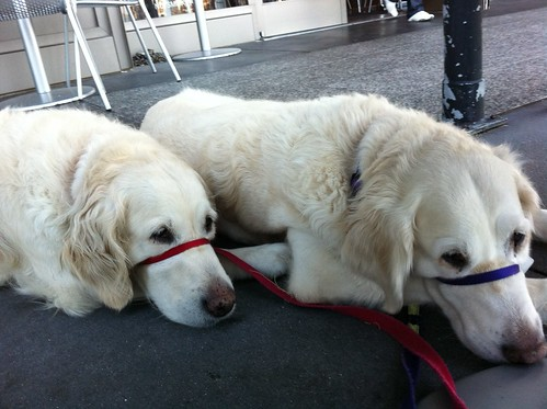 Frisket & Sailor at il Cane Rosso, waiting for the food to fall | by epc