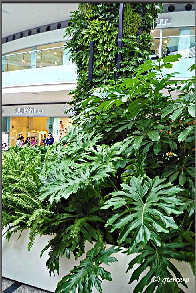 Verde Verde Plaza Terrazas Lomas Verdes Naucalpan