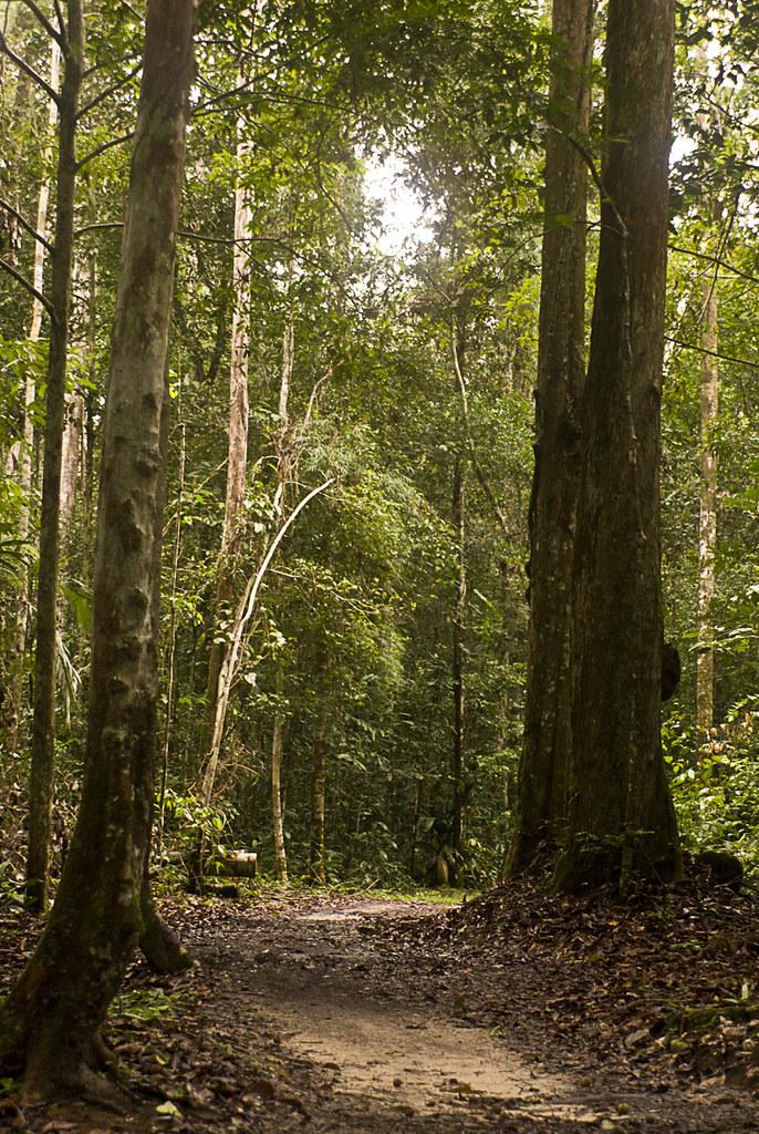 O entardecer na Floresta