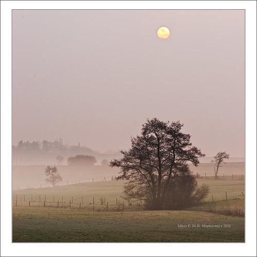 trees sun mist clouds sunrise landscape sony fields l luxembourg paysage lux ssm 70200mmf28g gonderange sonydslra900 mlux maciejbmarkiewicz landscapelu 49°411747n6°14043e