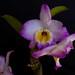 Rosario's Orchids